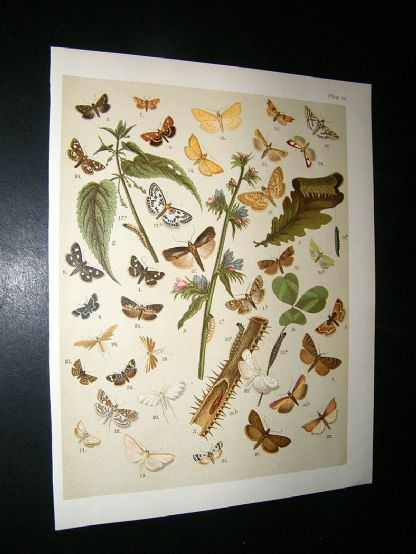 Kirby 1907 Pyraces, Pearls & Grass Moths etc 54. Antique Print | Albion Prints